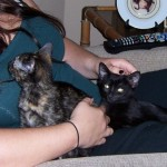 FURR Kitties in New Home