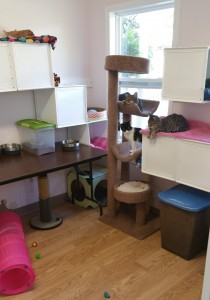 FURR's rescue facility has large, open rooms for the cats to enjoy while awaiting adoption.
