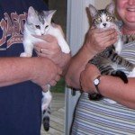Cookies Kittens with New Family